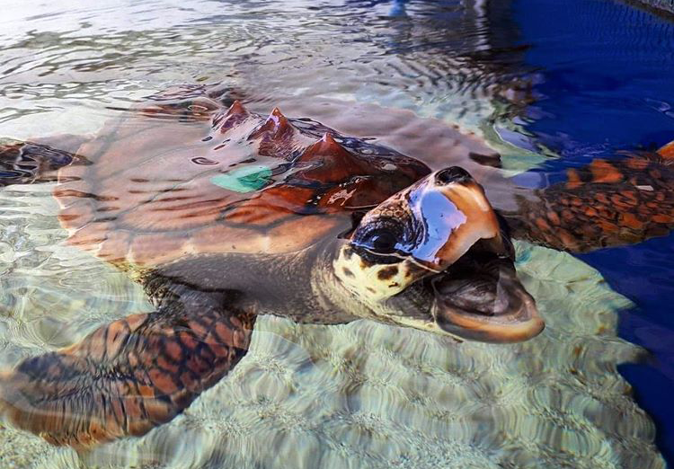 turtle, AQWA